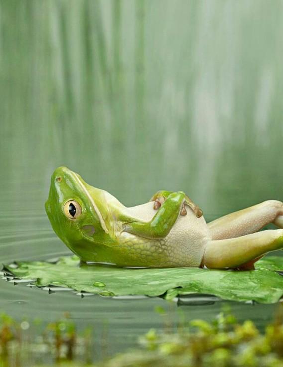 frog-at-rest